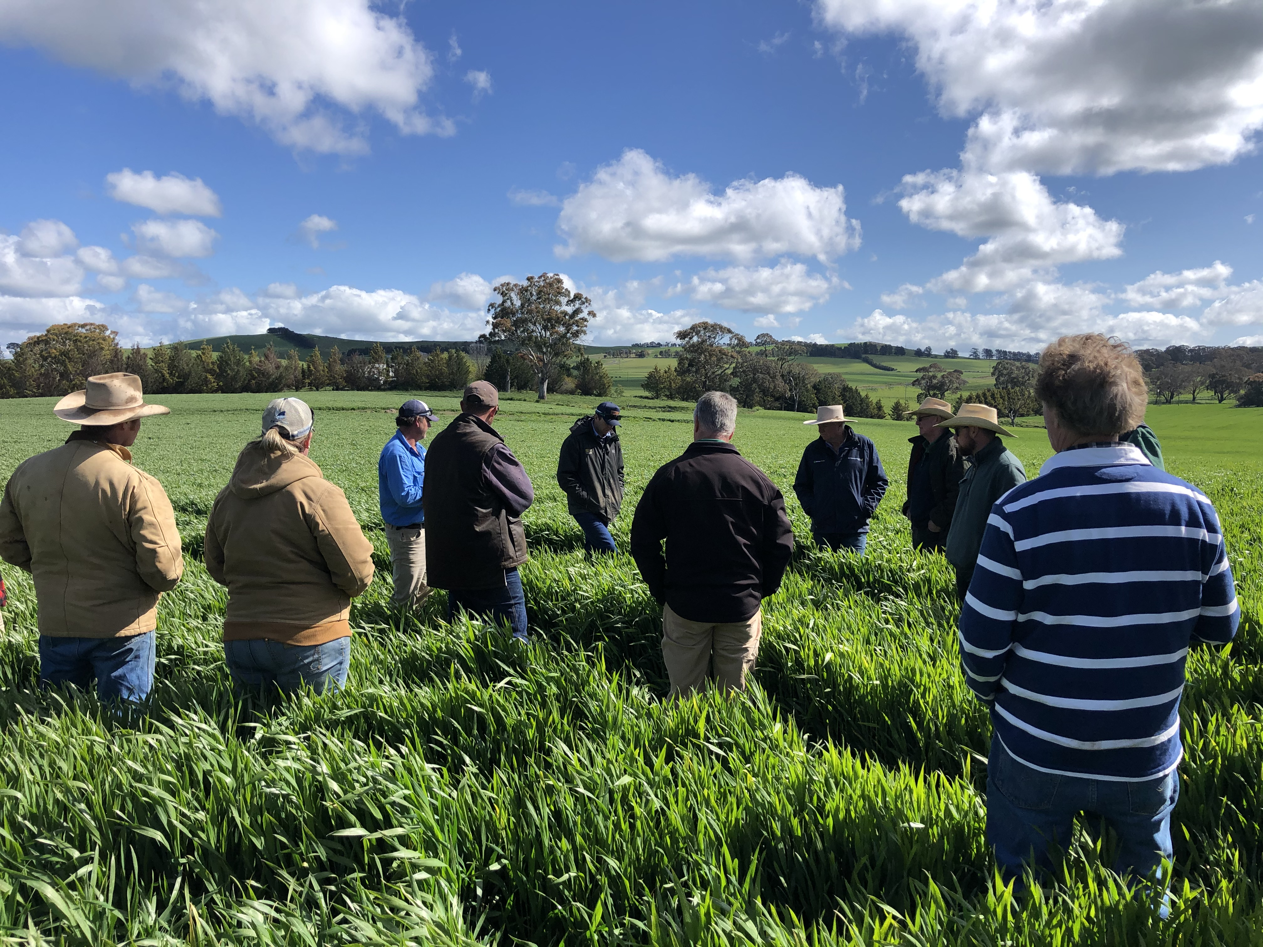 Farmers inspection paddock at field day