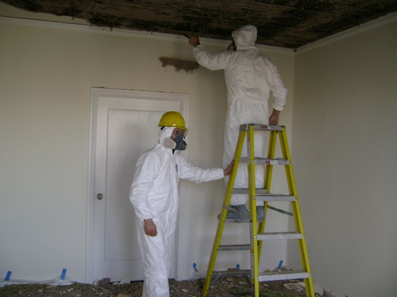 Image result for Mold Contractor  istock