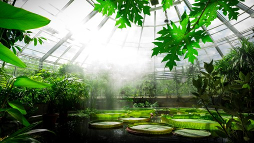 Tropiska växthuset och jätte näckrosorna