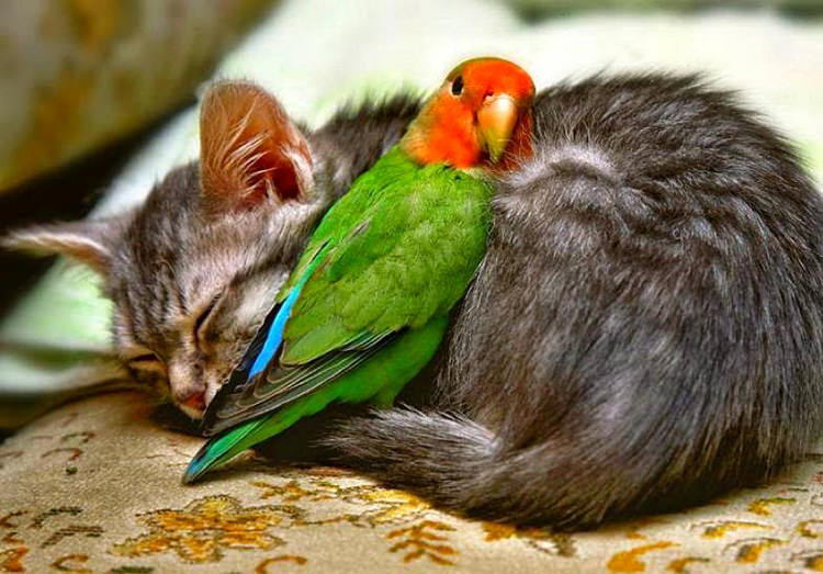 cute-animal-friends-2