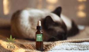 Benefits of CBD for Pets by UprightCBD