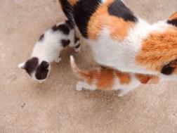 Staying close to mama