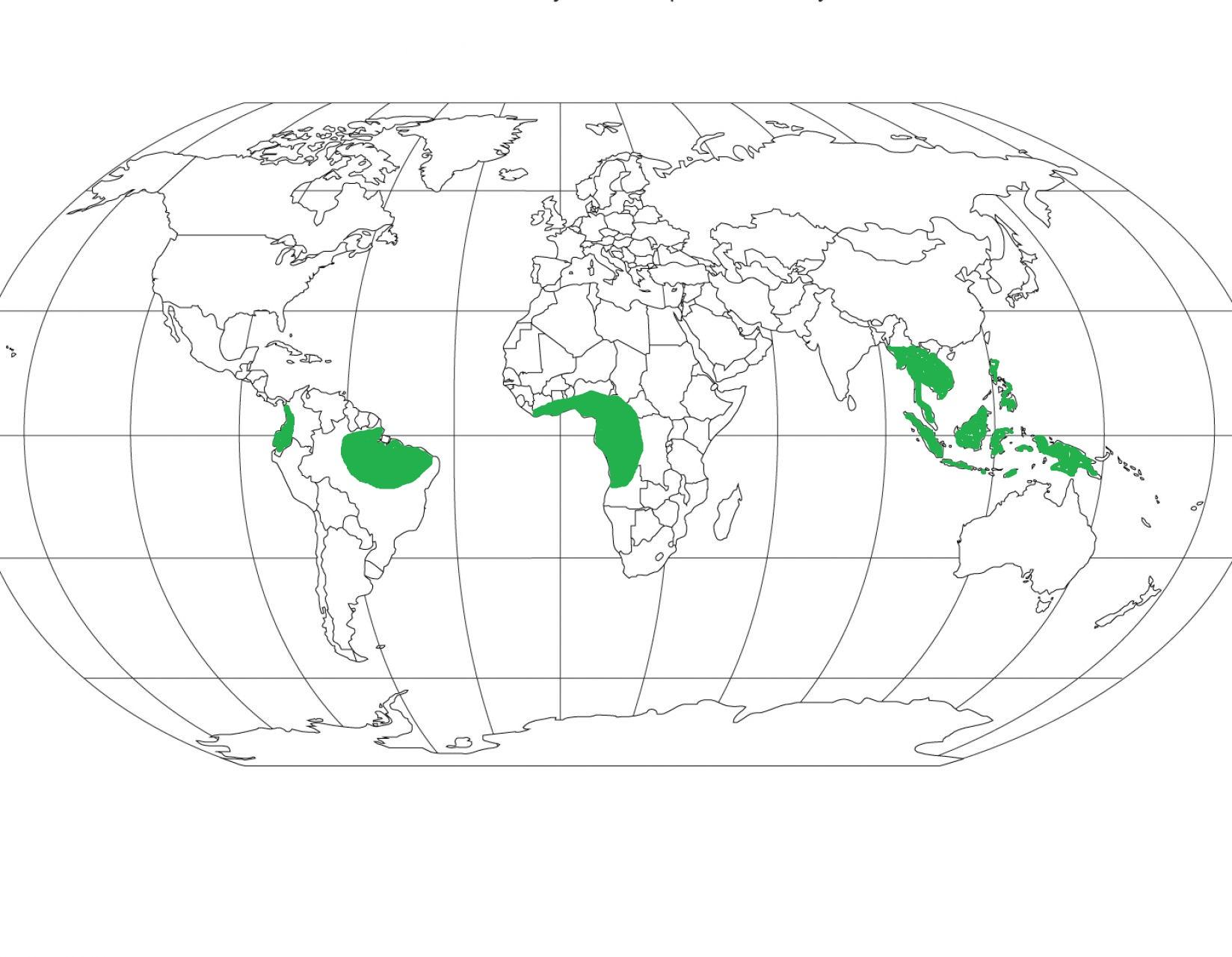 Hot Wet Equatorial Climate Tropical Rain Forest