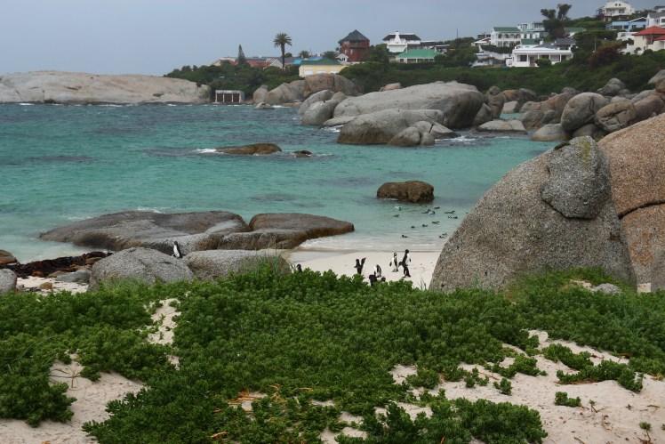 Boulders Beach Penguins, south of Cape Town