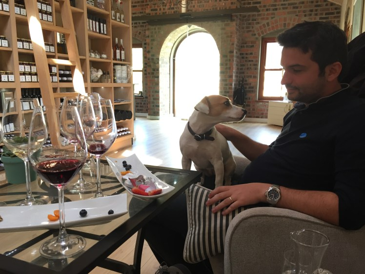 wine tram experience south africa: wine tasting at la bourgogne