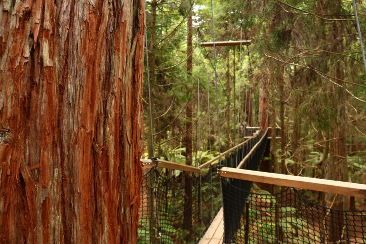 Redwood's soft bark in the foreground, and Bridge in the background at Redwoods Treewalk Rotorua New Zealand