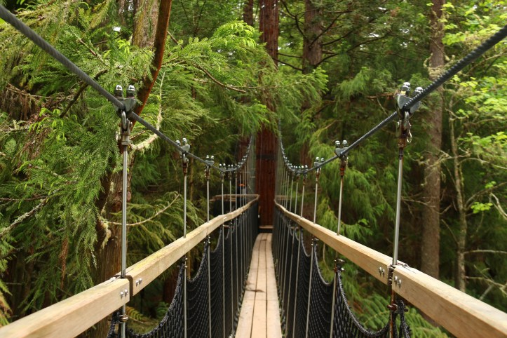 Bridge on the Redwoods Treewalk in Rotorua Nez Zealand