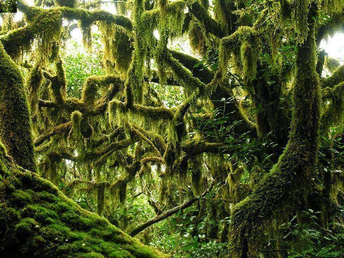 SpainSummer Travel Tips la gomera laurel forest