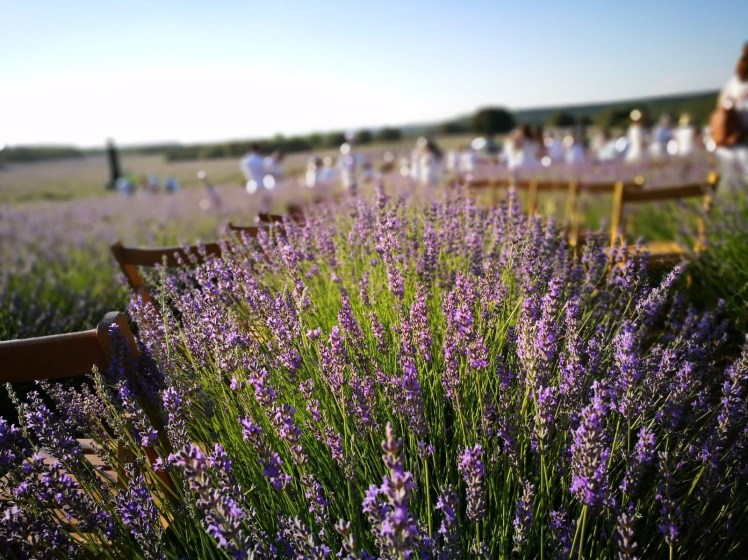 Lavender fields of Brihuega, lavender music festival