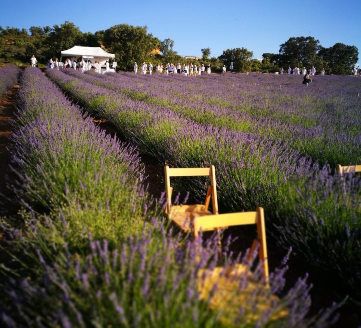 Lavender fields of Brihuega, Festival de la lavanda rows of chairs in the lavender