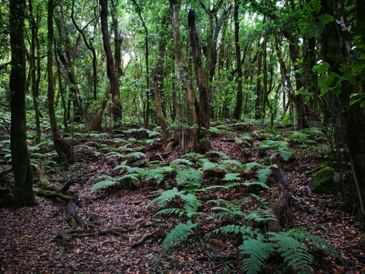 La Gomera Garajonay National Park forest and ferns