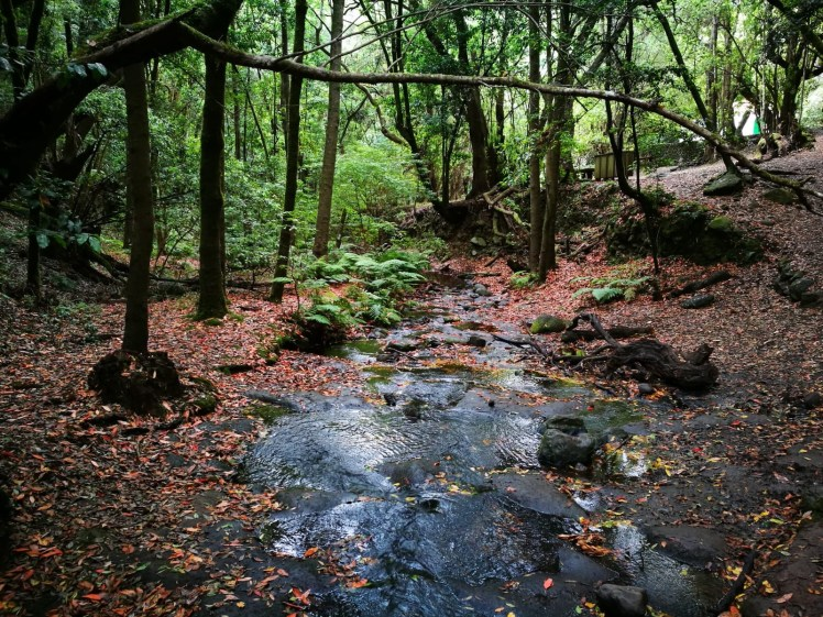 La gomera Garajonay National Park, water stream through laurisilva forest