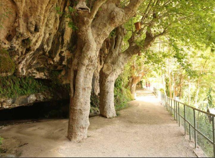 trees cut through stone at Sant Miquel del Fai