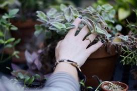 Gardeners Beware: Peat Moss Adds to Global Warming!