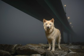 Griffin below the Academy Bridge, Annapolis, on a foggy Christmas Day, 2015. Griffin is owned by the photographer, Gregg Patrick Boersma.