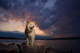 Griffin at Jonas Green Park, Annapolis, MD. Griffin is owned by the photographer, Gregg Patrick Boersma.