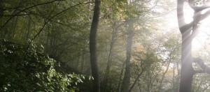 cropped-Fog_forrest_frickberg.jpg