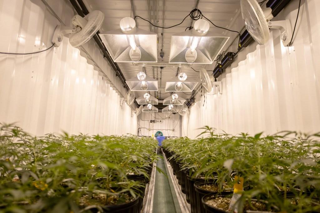 cannabis equipment financing 1