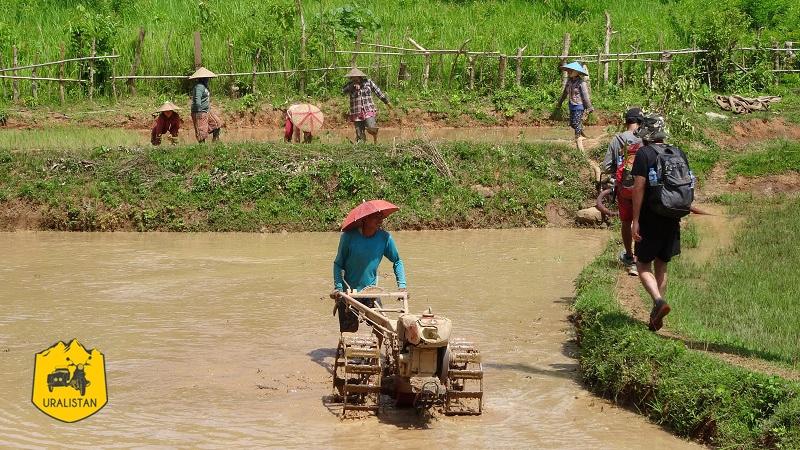 Rizières au Laos, travail agricole, culture du riz. Repérage trek OffRoad Laos Adventures