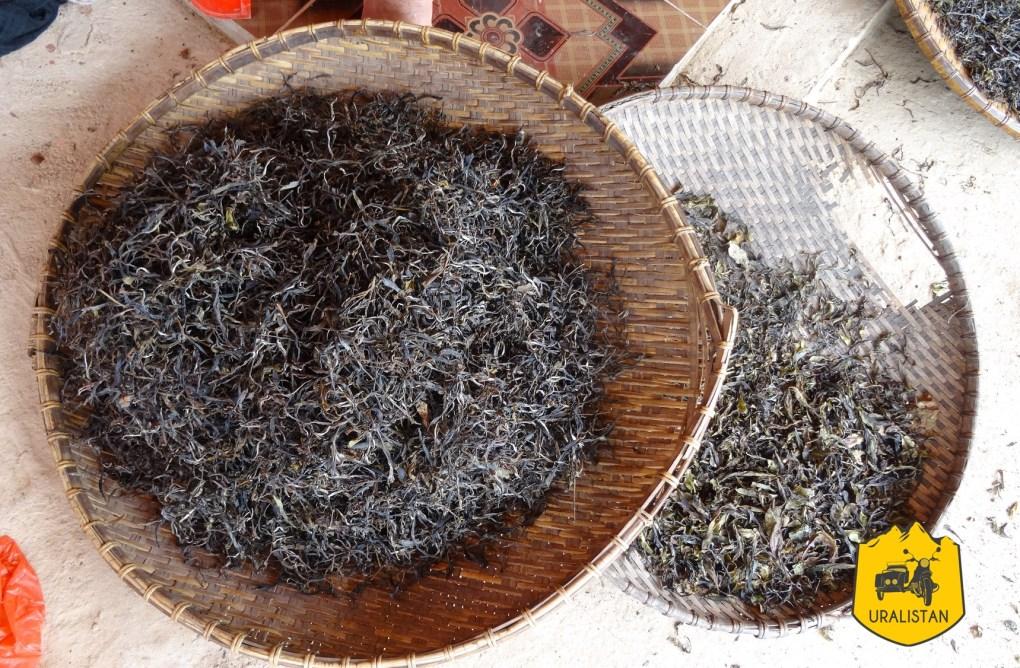 Thé de Phongsaly, Laos