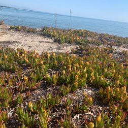 plage de Solenzara