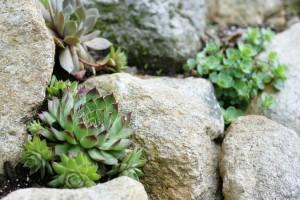 succulentsgarden-675x452