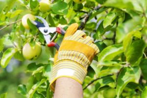 Fruit7-560x373