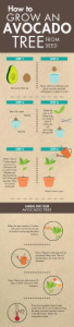 Plants that Clean the Air.cdr