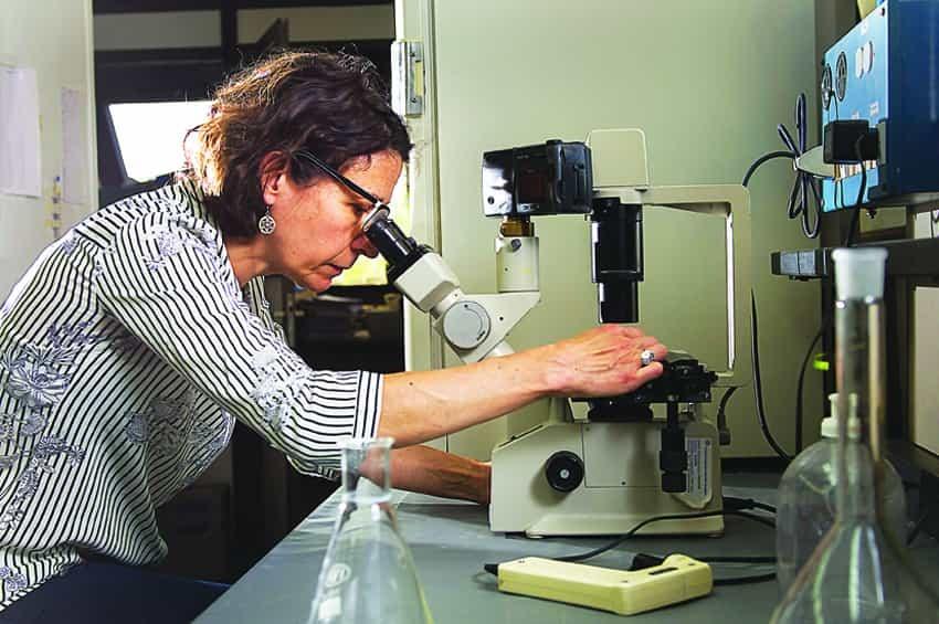 Mariana Puntel Doctora Ciencias Químicas e Investigadora Conicet-Bahia Blanca