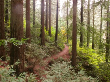 so-peaceful-the-redwood-trail-in-hoyt-arboretum-redwoods-hoytarboretum_29957363763_o