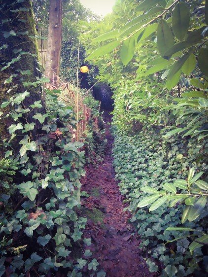the-super-secret-foot-path-at-the-end-of-sw-old-orchard_30978735180_o