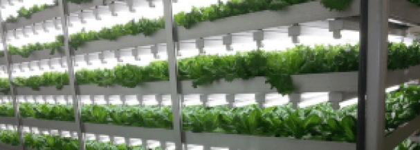 Vertical-Farming-Proenza