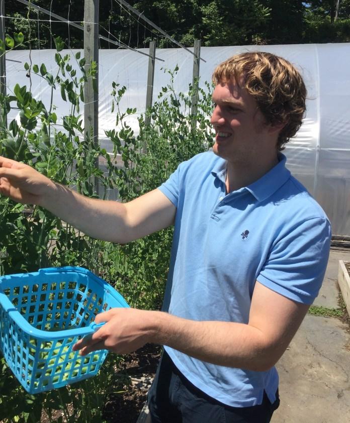 Sam Wells (Picking Snap Peas at Renewal Farm in Garrison, NY) (1)