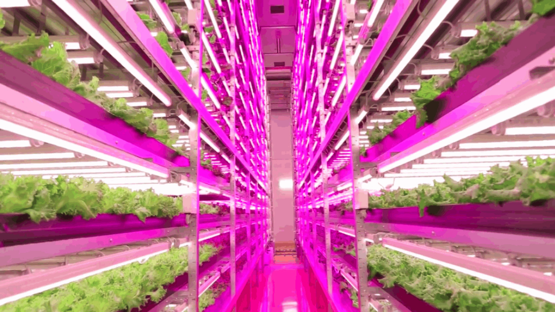Led Lighting For Vertical Farms Multilayer Production