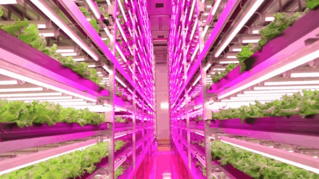 ge-horticultural-led-grow-lights-japan-plant-factory