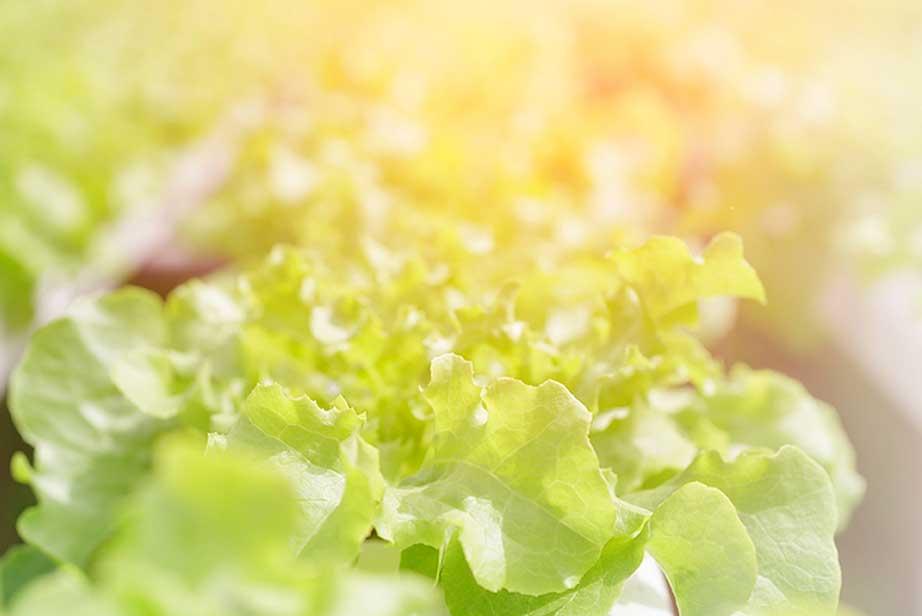 Illuminating the Farm of the Future – Jones Food Company Ltd....
