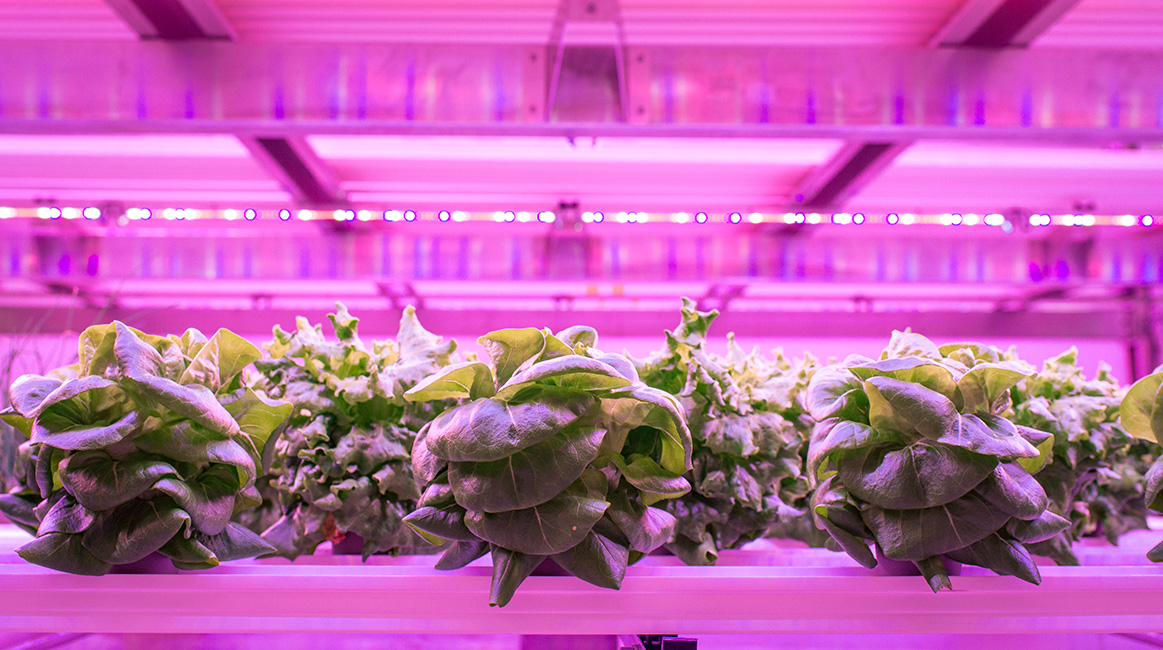 Vertical Farming now aiding beer brewing