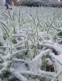 winterstorm7