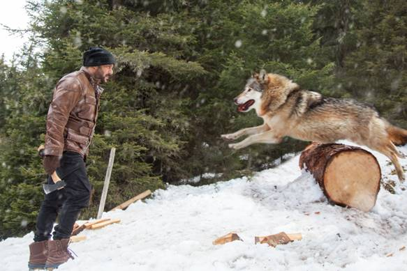 Salman Khan battles wolves in Tiger Zinda Hai