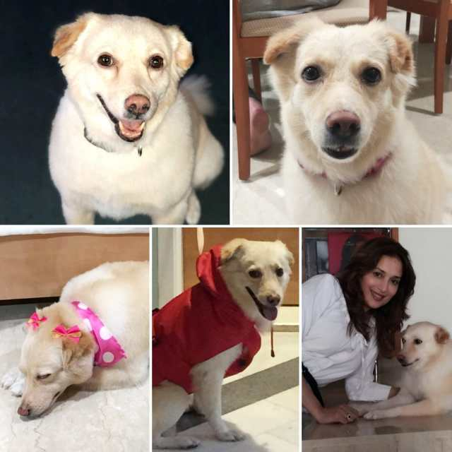 Madhuri Dixit and her Pet Riya