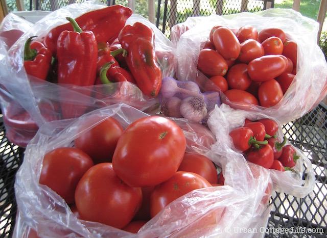 Tomato & Pepper Bounty | ©  Urban Cottage Life.com