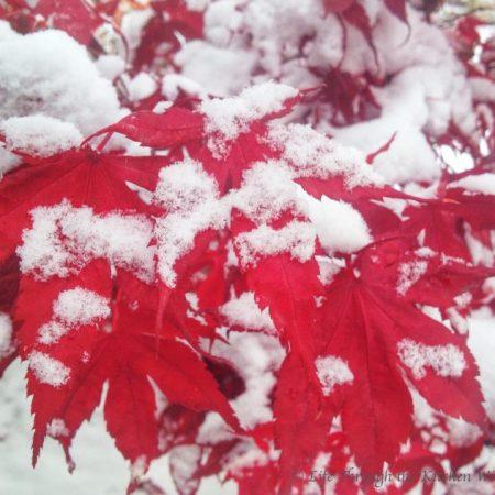 Winter Beauty at My Doorstep   © Life Through the Kitchen Window.com
