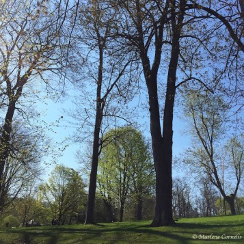 The Greening - May 7, 2015   © Marlene Cornelis