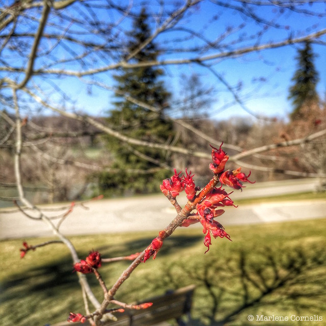 Spring's About to Burst Forth |© UrbanCottageWeekend.com