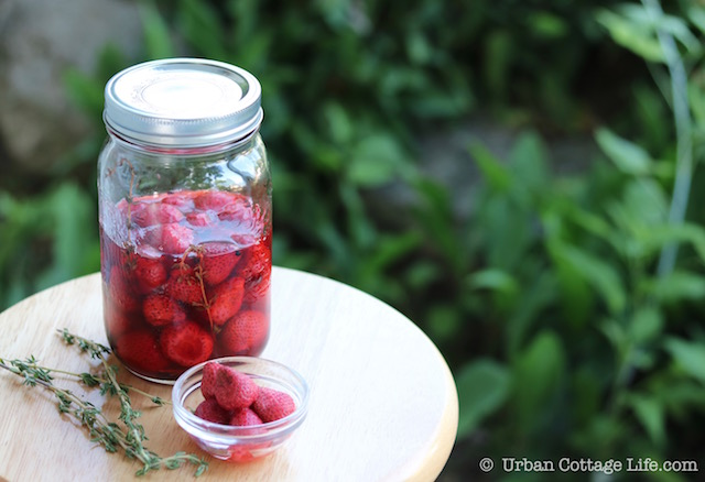 Pickled Peppered Strawberries |© UrbanCottageLife.com