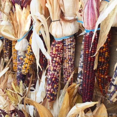 Flint Corn, Autumn 2016   © Marlene Cornelis 2016