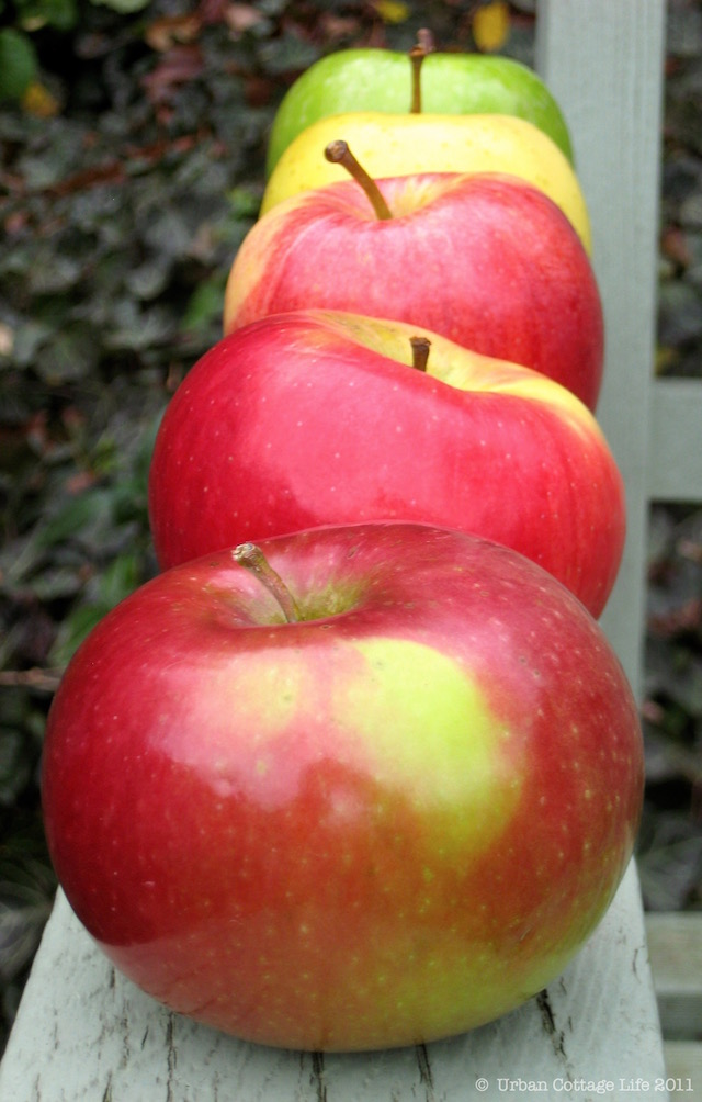 Apples to Love | © Marlene Cornelis 2011