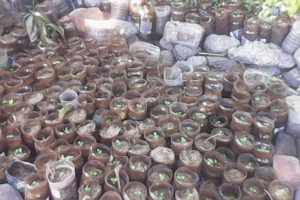 Nursing and Seedling project