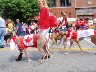 More Canada Day dogs passing by