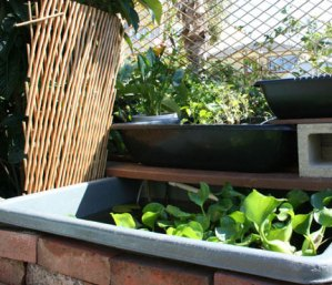 back-yard-aquaponics